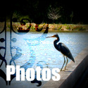 Sunrise Lakes Photo Gallery